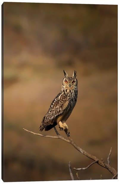 Eagle-Owl Canvas Art Print