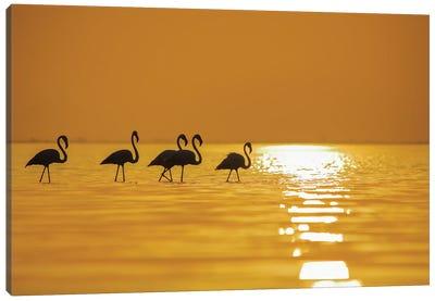 Flamingo In Sunset Canvas Art Print