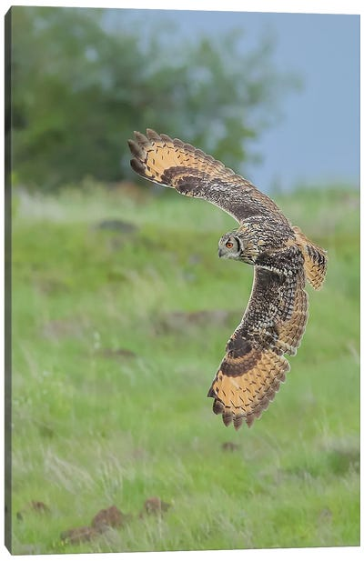 Eagle-Owl In Flight Canvas Art Print
