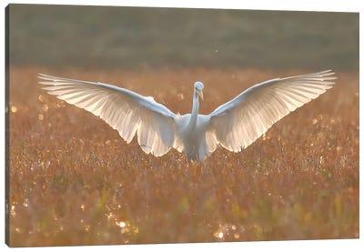 Egret In Action Canvas Art Print