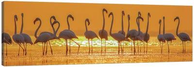 Flamingo Flock In Sunset Canvas Art Print