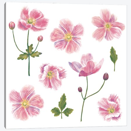 Japanese Anemones Canvas Print #NSQ166} by Nic Squirrell Canvas Print