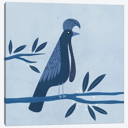 Umbrellabird Canvas Print #NSQ75} by Nic Squirrell Canvas Art
