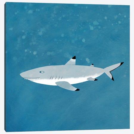 Black Tipped Reef Shark Canvas Print #NSQ99} by Nic Squirrell Canvas Print