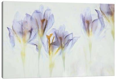 Spring Canvas Art Print