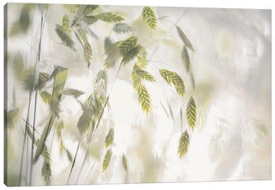 Grass Blades Canvas Art Print