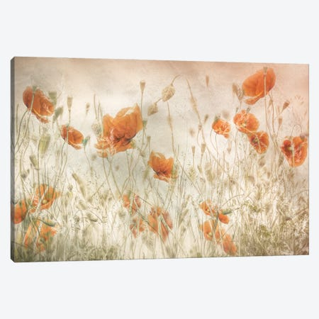 Poppies In The Field Canvas Print #NTA6} by Nel Talen Canvas Art