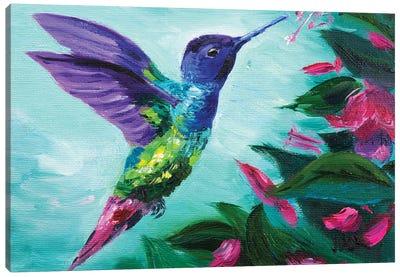 Hummingbird And Fuchsia Canvas Art Print