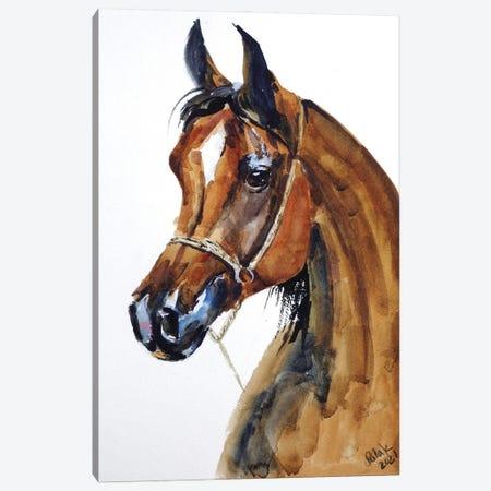 Arabian Horse Canvas Print #NTM5} by Nataly Mak Canvas Artwork