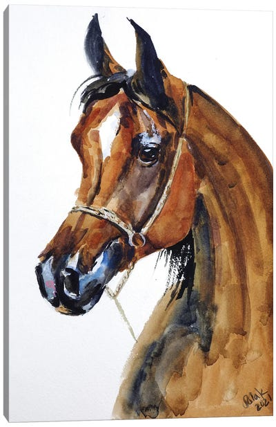 Arabian Horse Canvas Art Print
