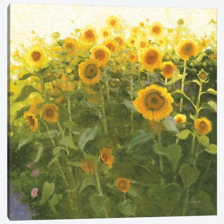 Sunflower Field Canvas Print #NVA8} by Shirley Novak Canvas Art Print
