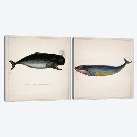 Whale Diptych Canvas Print Set #NWE2HSET003} by Natasha Wescoat Canvas Art Print