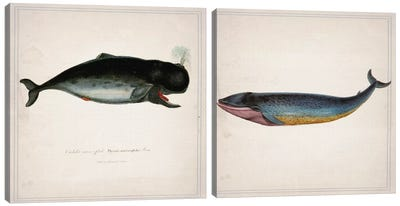 Whale Diptych Canvas Art Print