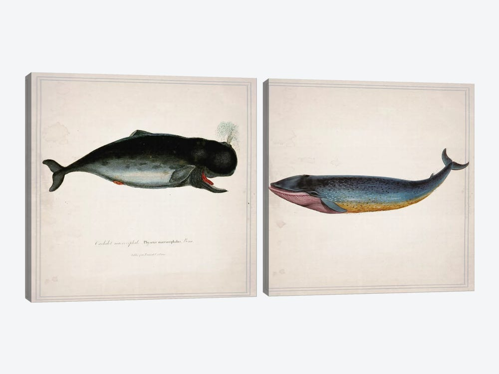 Whale Diptych by Natasha Westcoat 2-piece Canvas Art
