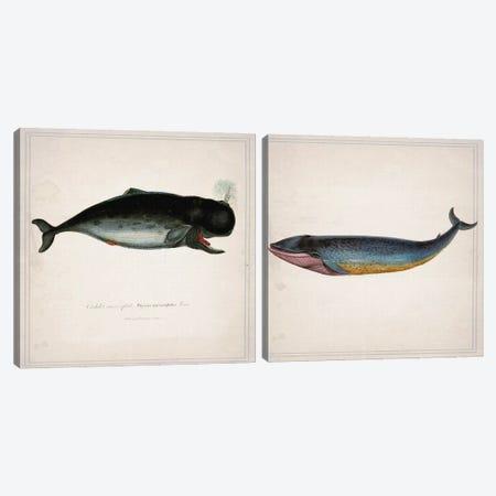 Whale Diptych Canvas Print Set #NWE2HSET003} by Natasha Wescoat Canvas Art Print
