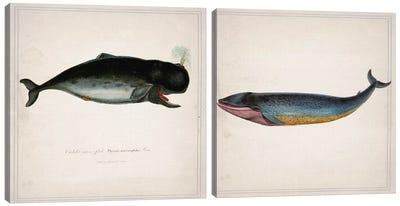 Whale Diptych Canvas Art Print