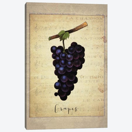 Grapes I Canvas Print #NWE32} by Natasha Westcoat Canvas Wall Art