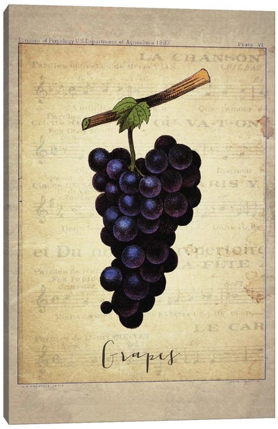 Grapes I Canvas Art Print