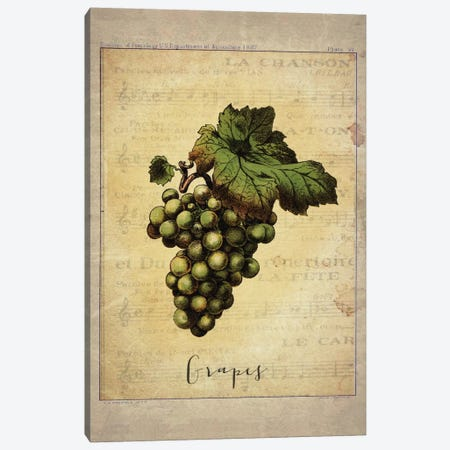 Grapes II Canvas Print #NWE33} by Natasha Westcoat Canvas Artwork