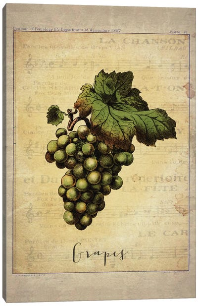 Grapes II Canvas Art Print