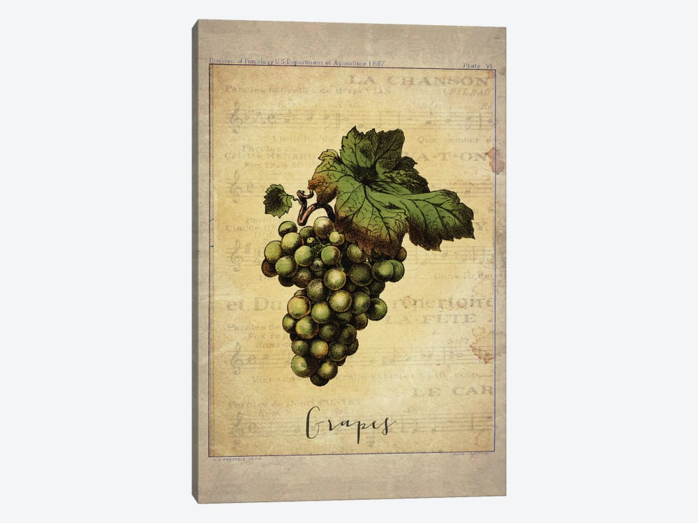 Grapes II by Natasha Westcoat 1-piece Canvas Art Print