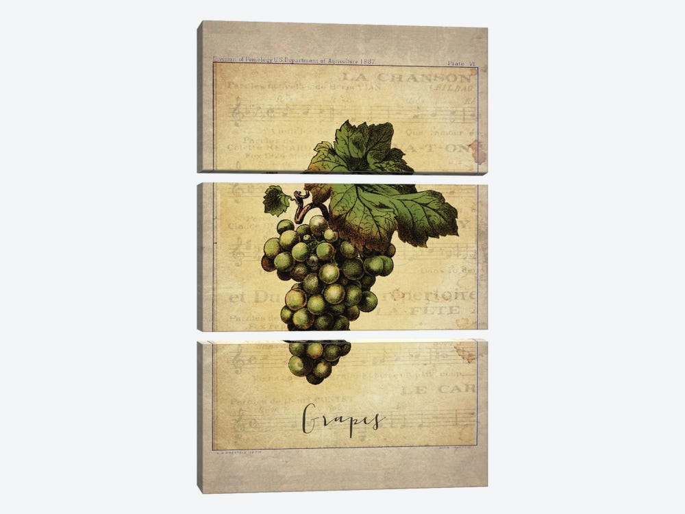 Grapes II 3-piece Art Print