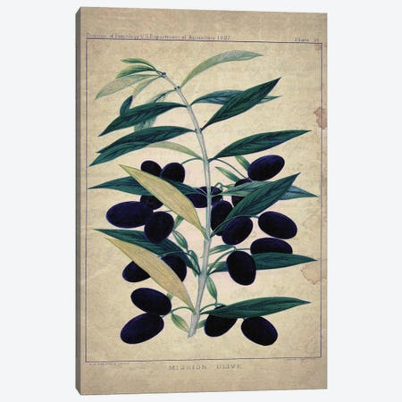 Olives Canvas Print #NWE39} by Natasha Westcoat Canvas Artwork