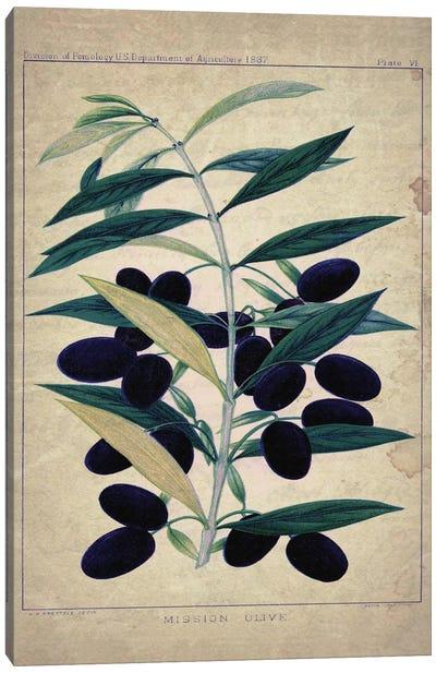 Olives Canvas Print #NWE39