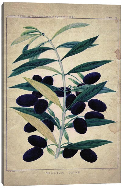 Olives Canvas Art Print