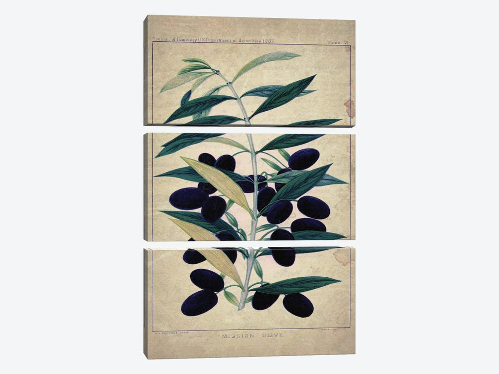 Olives by Natasha Westcoat 3-piece Canvas Art Print