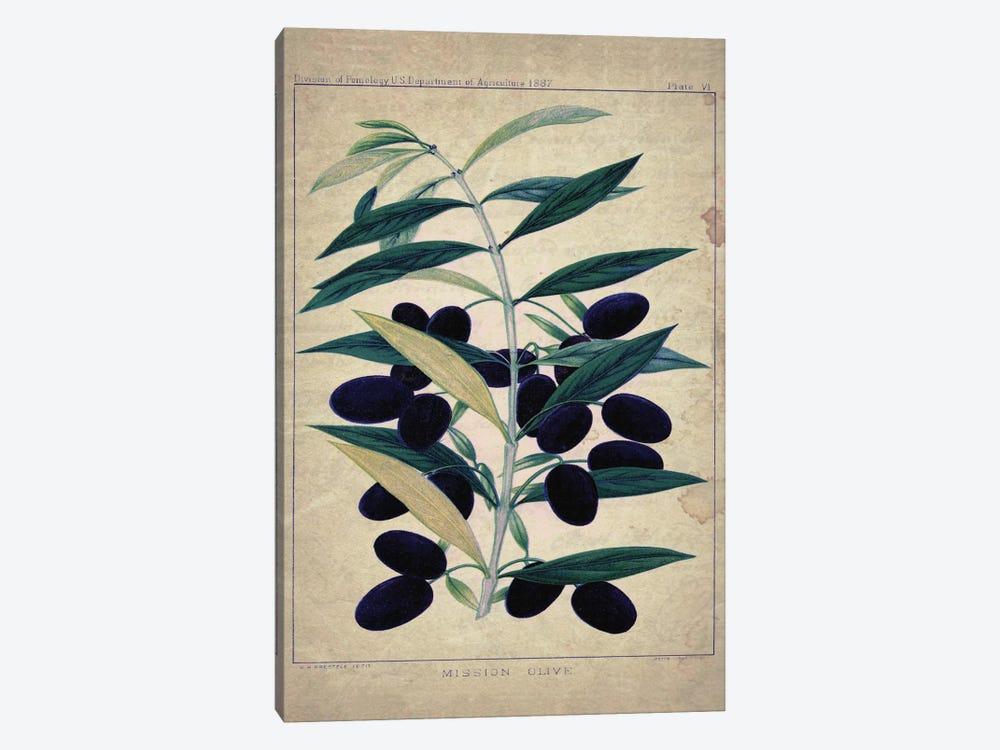 Olives by Natasha Wescoat 1-piece Canvas Print