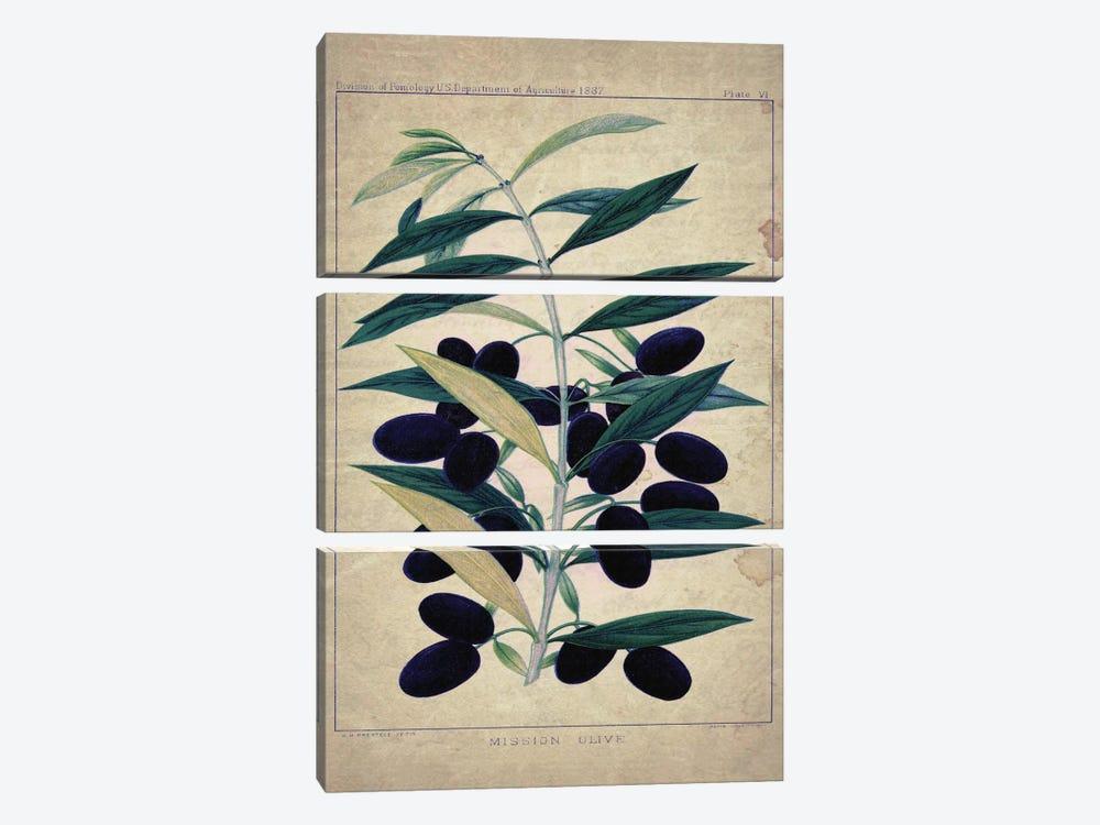 Olives by Natasha Wescoat 3-piece Canvas Art Print