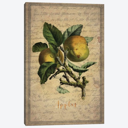 Apples Canvas Print #NWE3} by Natasha Wescoat Canvas Wall Art