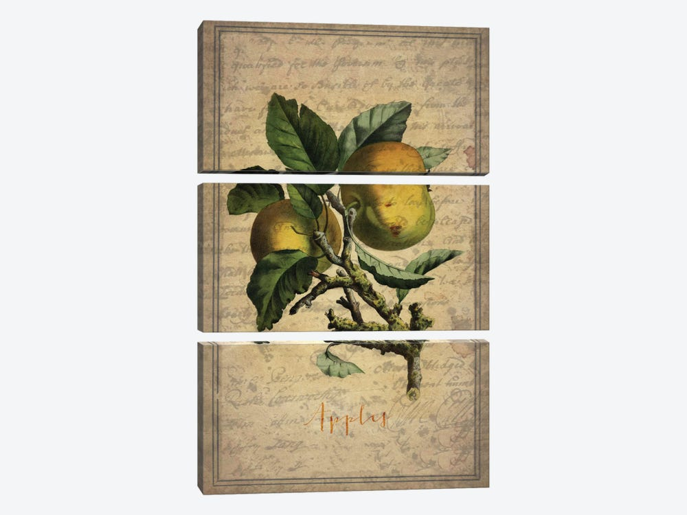 Apples by Natasha Westcoat 3-piece Canvas Artwork