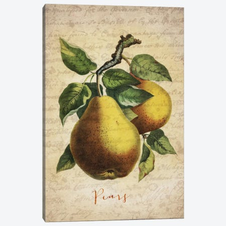 Pears Canvas Print #NWE43} by Natasha Wescoat Art Print