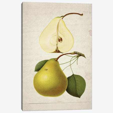 Pears II Canvas Print #NWE44} by Natasha Westcoat Canvas Artwork