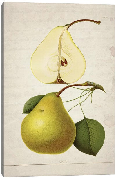 Pears II Canvas Art Print