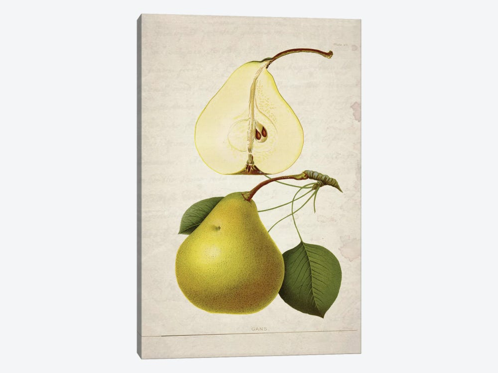 Pears II by Natasha Wescoat 1-piece Canvas Art Print