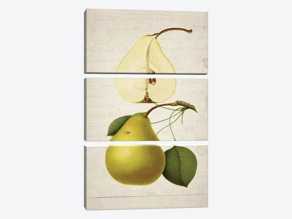 Pears II by Natasha Wescoat 3-piece Canvas Art Print