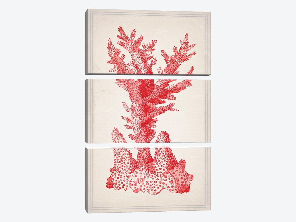 Red Coral I by Natasha Westcoat 3-piece Canvas Artwork