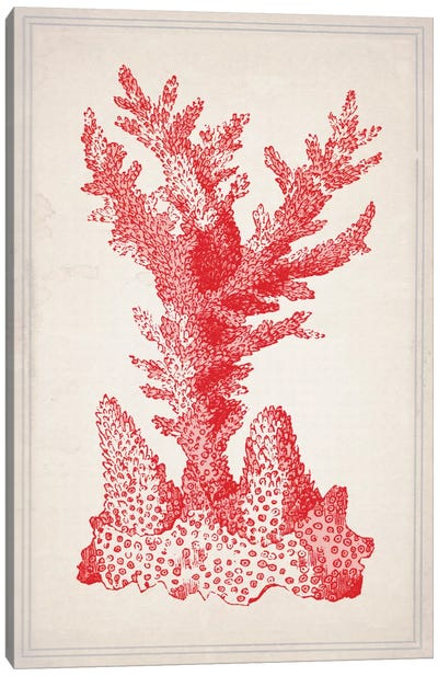 Red Coral I Canvas Art Print