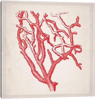 Red Coral II Canvas Art Print
