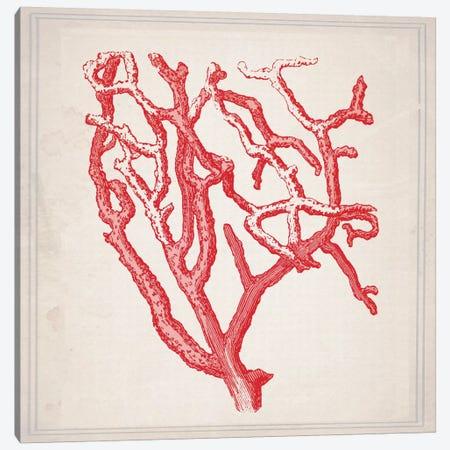 Red Coral II Canvas Print #NWE48} by Natasha Wescoat Canvas Print