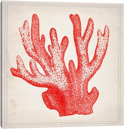 Red Coral III Canvas Art Print