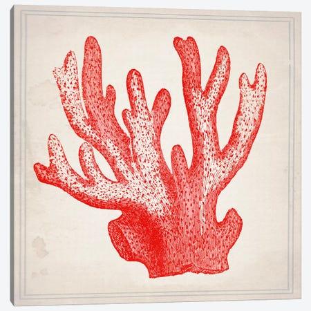 Red Coral III Canvas Print #NWE49} by Natasha Wescoat Canvas Art Print