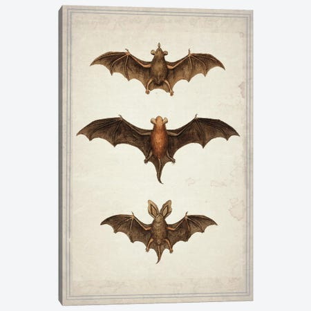 Bats Canvas Print #NWE4} by Natasha Wescoat Canvas Print