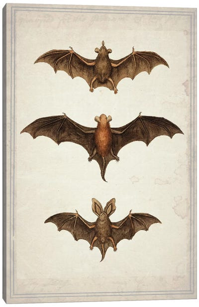 Bats Canvas Art Print
