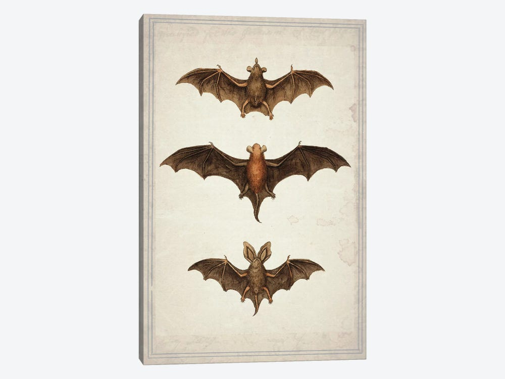 Bats by Natasha Westcoat 1-piece Canvas Print