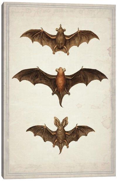 Bats Canvas Art Print