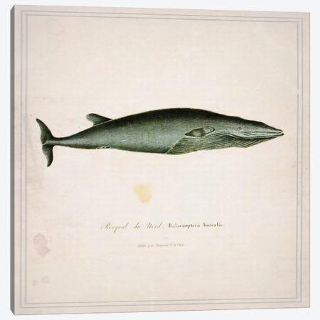 Whale I Canvas Print #NWE58} by Natasha Wescoat Canvas Artwork